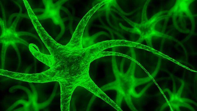 Celule nervoase noi
